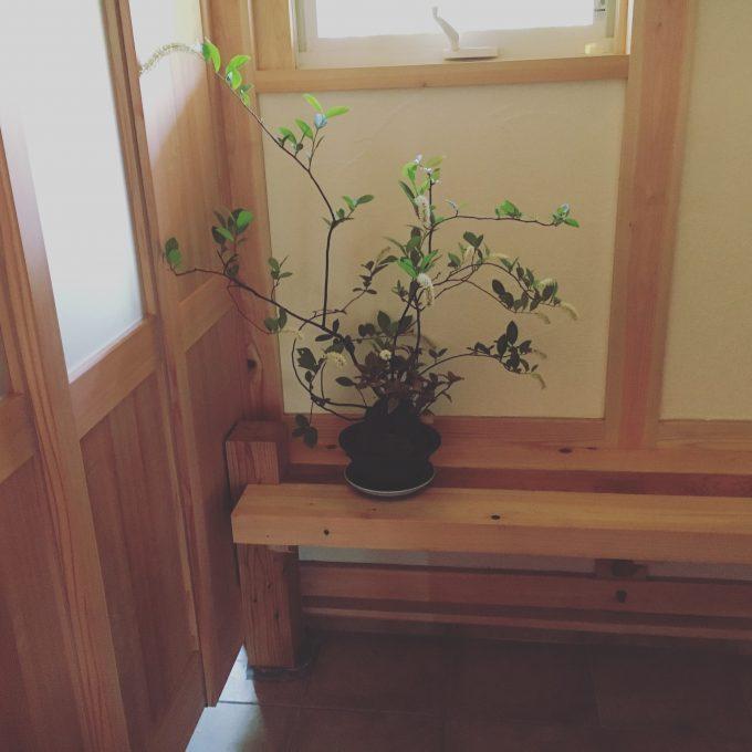 玄関脇のカウンター台、ダイニングカウンターと柱の残り材でつくりました。杉と桧のツートンです。